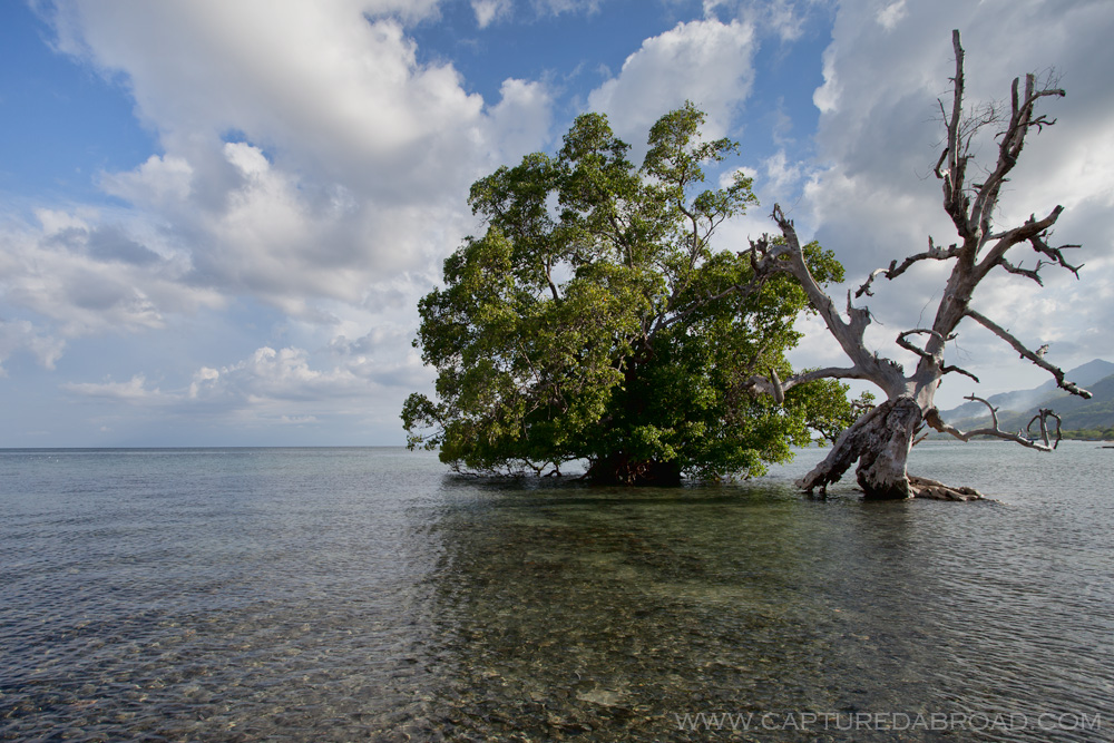 Tree/Seascape off Atauro island