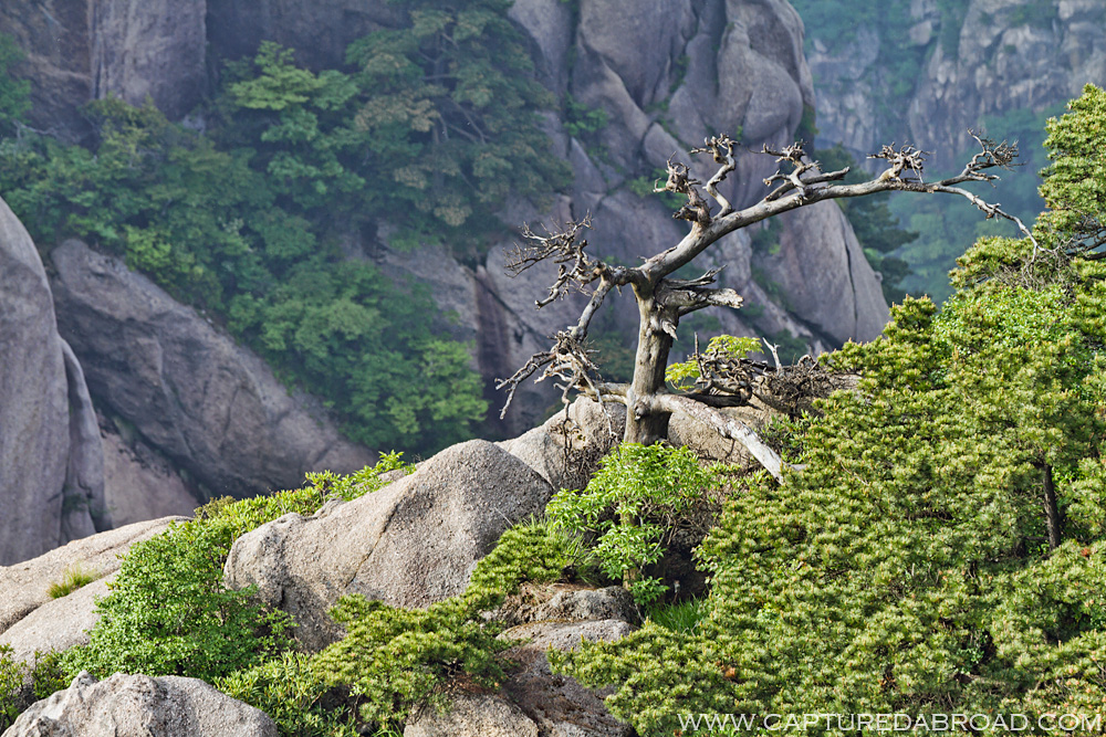 "Huangshan ""Yellow Mountain"""