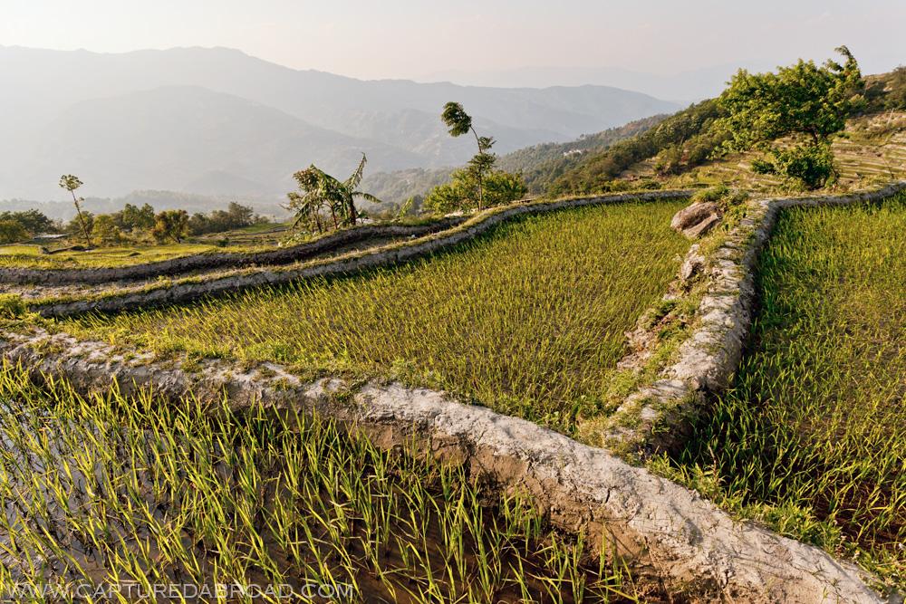 Yunyang rice fields