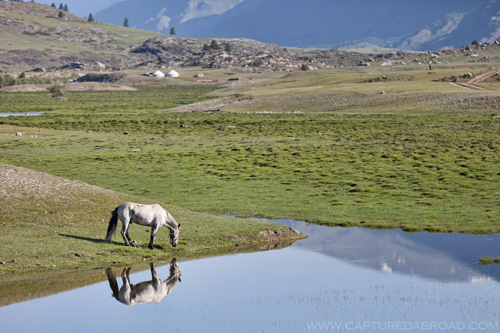 Horse reflection in waters above the Khurgan Nuur Mongolia