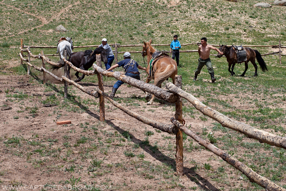Terelj National Park Mongolia, horse riding