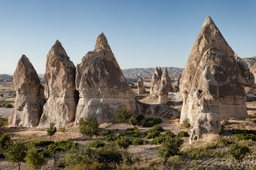 Tomotoes grow under the Fairy Chimneys of Cappadocia